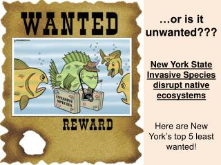…or is it unwanted??? New York State Invasive Species disrupt native ecosystems