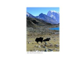 Quelle: http :// www.project-himalaya.com