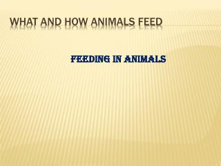 What and how animals feed