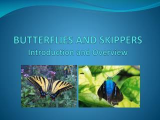 BUTTERFLIES AND SKIPPERS Introduction and Overview