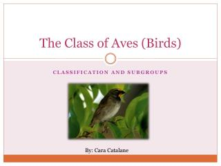 The Class of Aves (Birds)