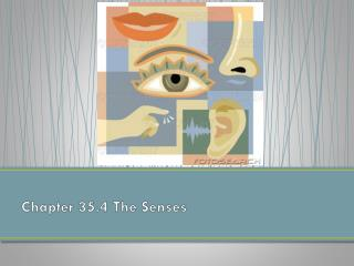 Chapter 35.4 The Senses