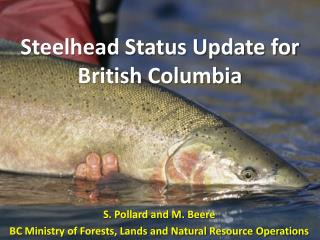 Steelhead Status Update for British Columbia