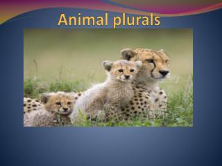 Animal plurals