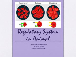 Regulatory System in Animal