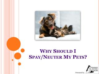 Why Should I Spay/Neuter My Pets?