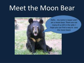 Meet the Moon Bear
