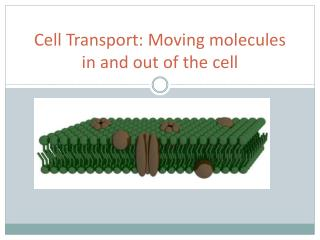 Cell Transport: Moving molecules in and out of the cell