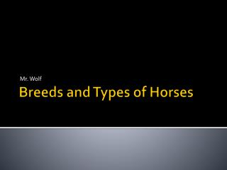 Breeds and Types of Horses