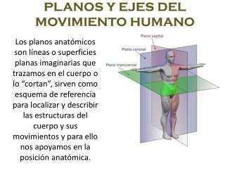 PLANOS Y EJES DEL MOVIMIENTO HUMANO