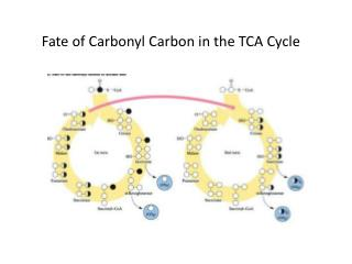 Fate of Carbonyl Carbon in the TCA Cycle