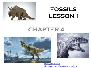 FOSSILS                  LESSON 1