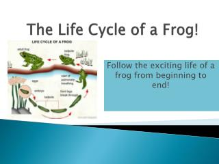 The Life Cycle of a Frog!