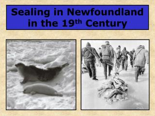 Sealing in Newfoundland in the 19 th  Century