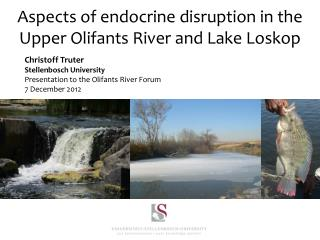 Aspects of endocrine disruption in the Upper  Olifants  River and Lake Loskop