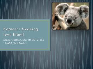 Koalas! I freaking love them!