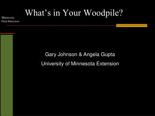 What's in Your Woodpile?