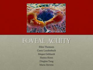 Foveal  Acuity