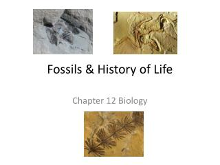 Fossils & History  of Life