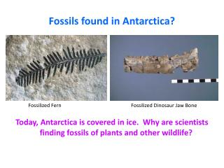 Fossils found in Antarctica?