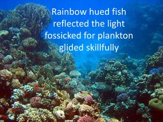Rainbow hued fish  reflected the light fossicked for plankton glided skillfully