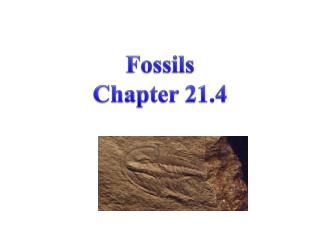 Fossils Chapter 21.4