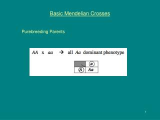 Basic Mendelian Crosses
