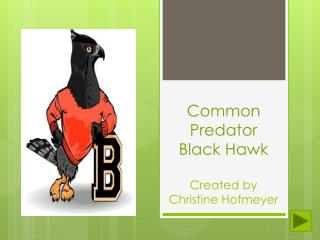 Common Predator    Black Hawk  Created by Christine Hofmeyer