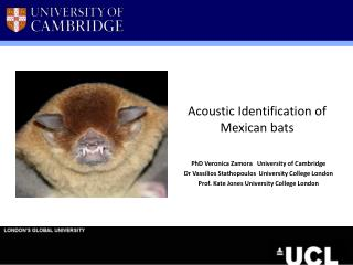 Acoustic Identification of Mexican bats