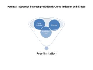 Potential Interaction between predation risk, food limitation and disease