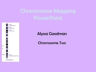 Chromosome Mapping PowerPoint
