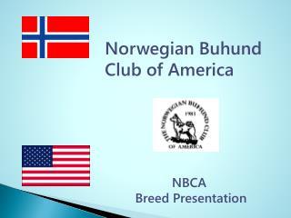 Norwegian Buhund  Club of America