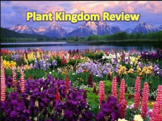 Plant Kingdom Review
