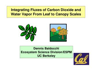 Integrating Fluxes of Carbon Dioxide and Water Vapor From Leaf to Canopy Scales