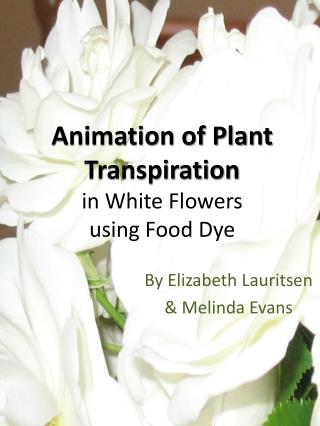 Animation of Plant Transpiration in White Flowers using Food Dye