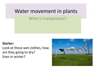 Water movement in plants