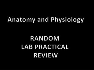 Anatomy and Physiology RANDOM  LAB  PRACTICAL  REVIEW