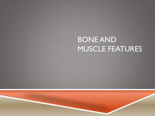 Bone and Muscle Features