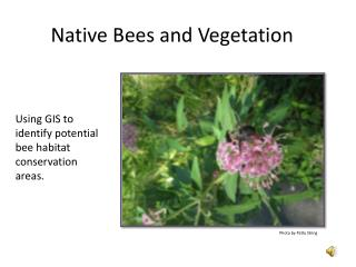 Native Bees and Vegetation