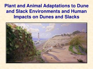 Plant and Animal Adaptations to Dune and Slack Environments and Human Impacts on Dunes and Slacks