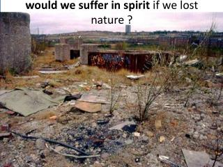 would we suffer in spirit  if we lost nature ?