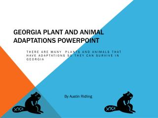 Georgia Plant and Animal Adaptations  powerpoint