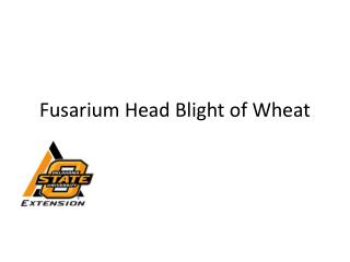 Fusarium Head Blight of Wheat