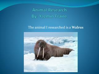 Animal Research               By:  Yazmin Fraire