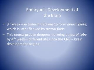 Embryonic Development of  the  Brain