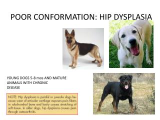 POOR CONFORMATION: HIP DYSPLASIA