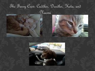 The Furry  Crew:  Cuddles, Doodles,  Keta , and Naomi