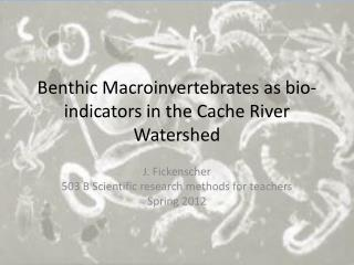 Benthic Macroinvertebrates as bio-indicators in the Cache River Watershed