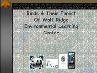 Birds & Their Forest  Of Wolf Ridge Environmental Learning Center