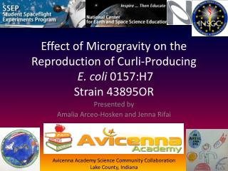 Effect of Microgravity on the  Reproduction of  Curli -Producing E. coli  0157:H7 Strain 43895OR